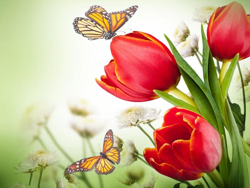 Χαρτοπετσέτες Decoupage 33 x 33 butterfly & tulips