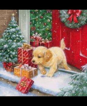 Το σκλυλάκι με... τα δώρα