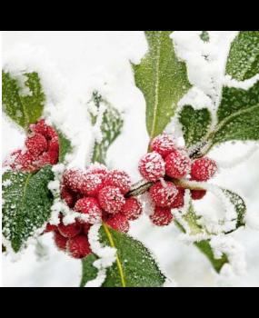 Φύλλα στο χιόνι