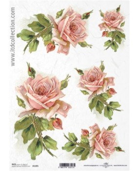 Ροζ τριαντάφυλλα 1205